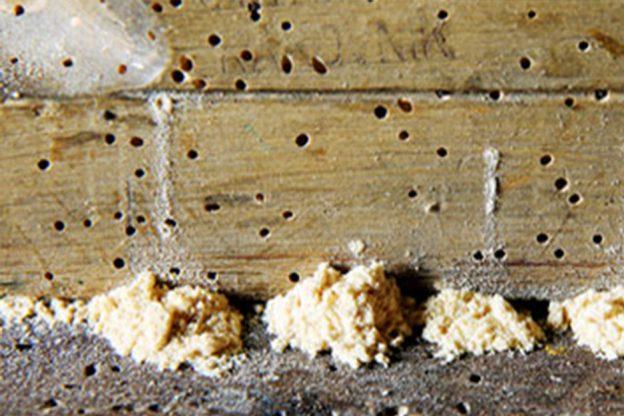 Eliminar carcoma elimina carcoma p gina 2 - Como eliminar la polilla de la madera ...