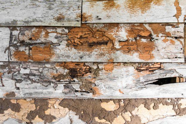 Eliminar carcoma de muebles recibidor rstico con mueble - Acabar con las termitas ...